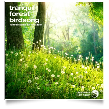 Tranquil Forest Birdsong Artwork
