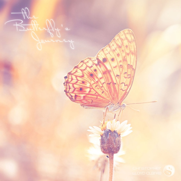 The Butterfly's Journey album art