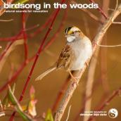 Birdsong in the Woods album artwork
